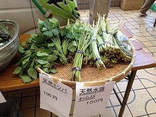 山菜いろいろ-1